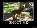Demotivational Poster – Shoot Me
