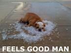 """Feels Good, Man"" Bulldog on Ice"