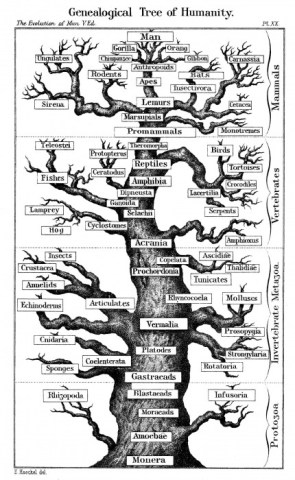 Genealogical Tree of Humanity