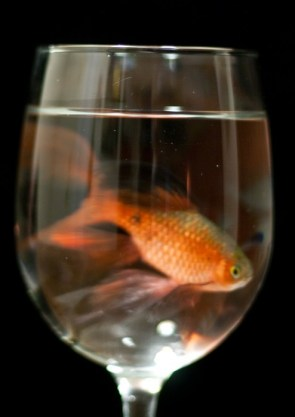 Fish in a wine glass
