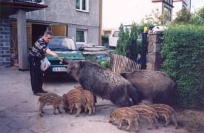 Feeding the pets