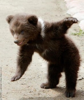 Awesome Bear