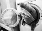 Laundry Jaws