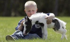 Einstein, the world's smallest horse