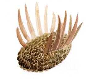 Burgess Shale Fauna