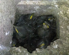 Angry birds in a hole