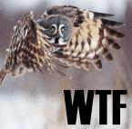 WTF owl