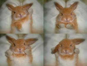 Bunny In A Photobooth