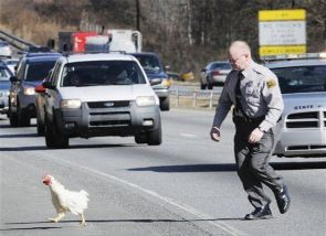 A cop chasing a chicken