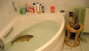 Bathtub Fishtank