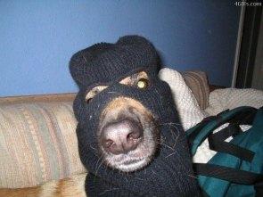 Terror dog!