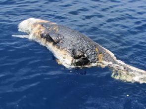 RIP Gulf Coast Marine Life