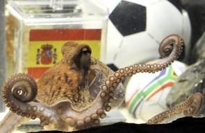 Paul – octopus foreseer