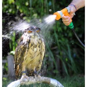 Washing The Owl