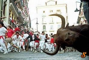Photobomb Bull