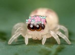 spiderbuddy <3