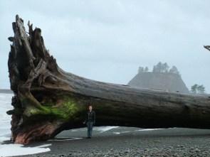 Driftwood at La Push, Washington