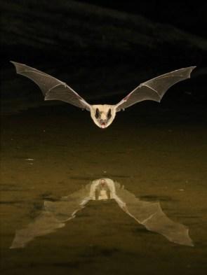 A Goddamed Bat, Man