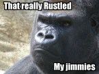 You don`t wanna rustle his jimmies