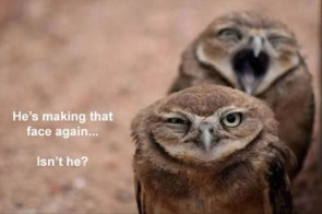 Goofy Owl