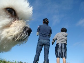 Doggy Photobomber