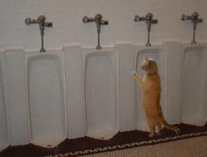 urinal cat