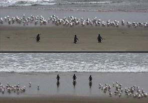Bad Ass Penguins