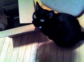 My pet cat.