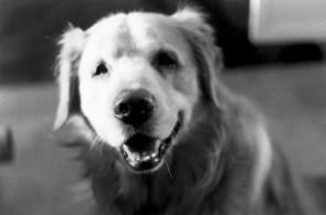 Rusty Dog