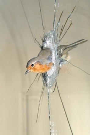 A bird in the glass..