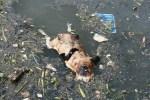dead_dog.JPG