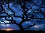 Dark Trees Wallpapers 2