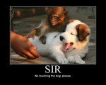 funny-pictures-no-touching-the-dog-please-i-has-a-funny.jpg