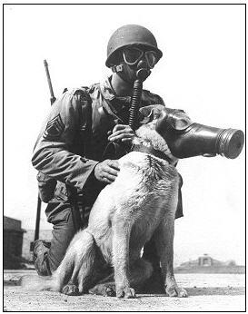doggy gas mask.jpg