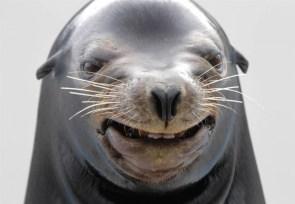Hurr-Durr Seal