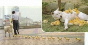 doggy and ducks