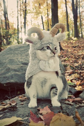 cat creature thing