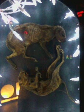 Squirrel cadaver art