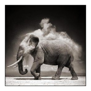 Elephant in a Dust Storm