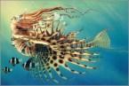 Lady Lionfish
