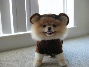 puppybear