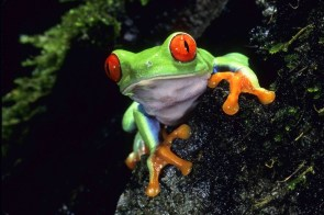Colorful Frog wallpaper