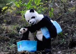 Raising Pandas