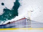 Polar bear encounters ship