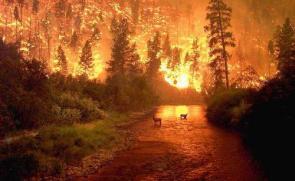 Bitterroot Fire