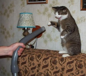 CatVac in need of captioning