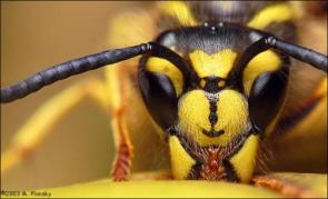 High quality bee close up