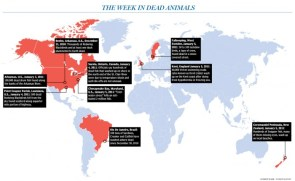 This week in dead animals