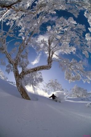 Snowy tree Skiing