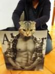 Cat body
